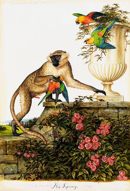 Jataka – I pappagalli e la scimmia